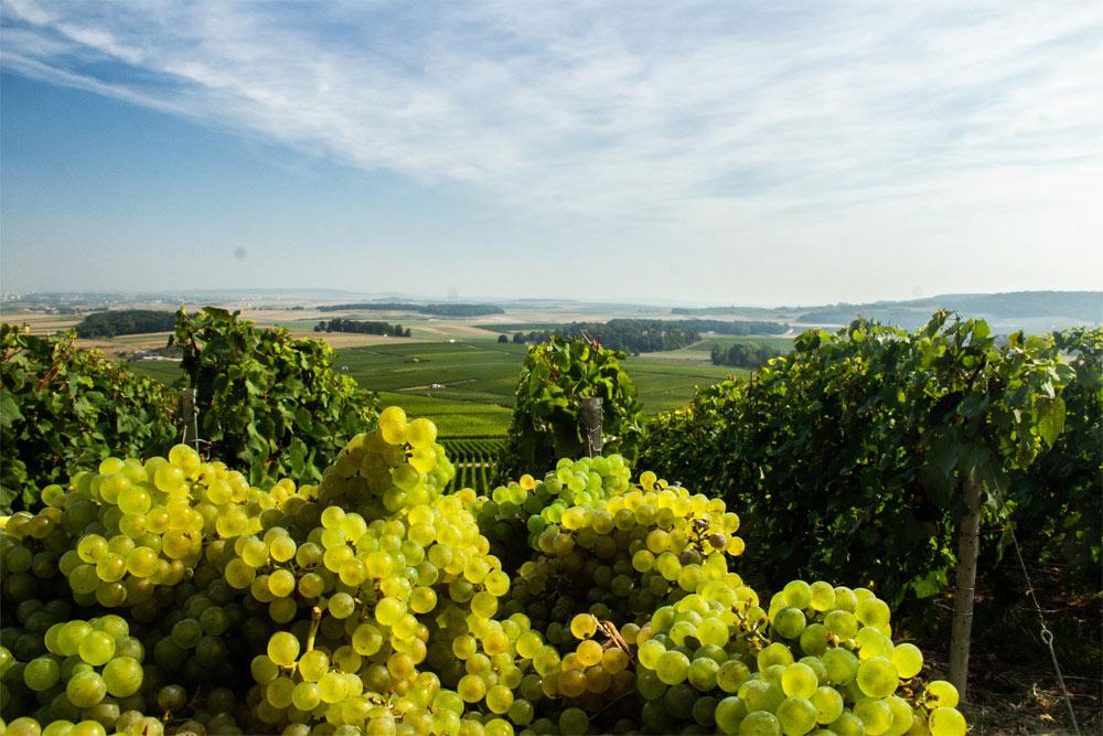 Champagne Christian Patis Domaine Raisins